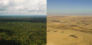 Forest v. Desert