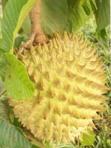 Rollinia fruit